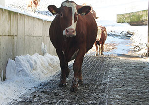 KRAIBURG MONTA rubber mat gives the cow foothold when walking on steep passages
