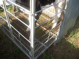 calf pen with metal grid before renovation
