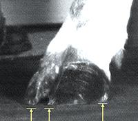 KRAIBURG soft walkway floorings ground contact of cattle inner claw