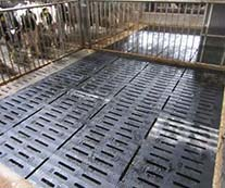 Calf fattening pen with KRAIBURG KURA SB slatted floor coverings made of rubber with curved surface, Efing operation