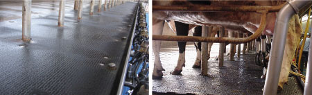 standing comfort in the milking parlour with soft rubber floorings