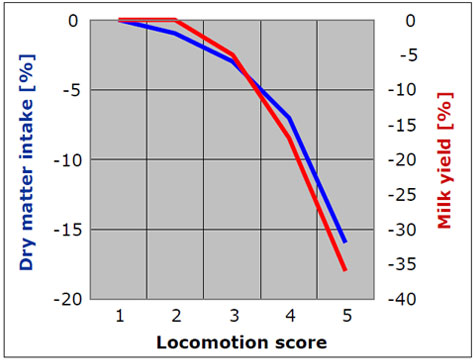 Milk yield according to locomotion score / lameness