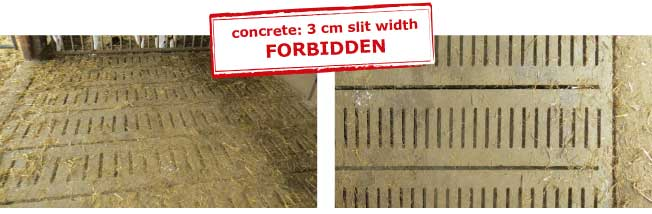 Before renovation the slit width in the concrete slatted floor was 3 cm which is not allowed in calf rearing