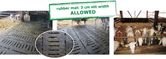 The concrete slatted floor was covered with tailor-made KRAIBURG KURA S rubber mats, 3 cm slit width in rubber flooring is allowed in calf rearing