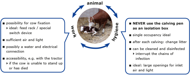 for a calving pen the requirements regarding animal, work and hygiene should be in focus