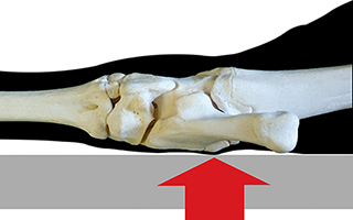 Hock joint on hard lying surface: weight burden on one spot, lying damages