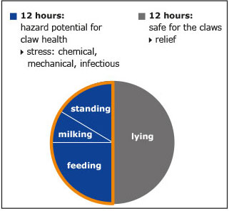 the chart shows the precarious parts of the day for claw health while the cow stands, gets milked or eats, the lying times relief the claws