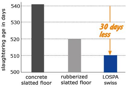 shorter fattening period with bulls kept on soft KRAIBURG LOSPA swiss rubber coverings on slatted floor