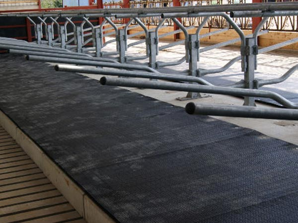KRAIBURG KIM LongLine continuous system made of rubber for cattle cubicles