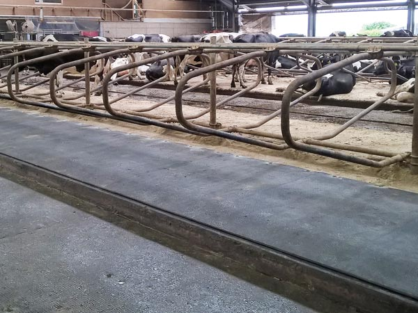 KRAIBURG WELA LongLine innovative continuous system for cattle cubicles