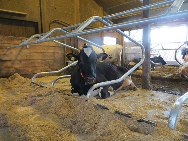 rubber cubicle cover WINGFLEX for dairy cows