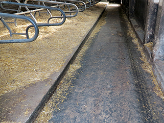KRAIBURG KURA P walking alley flooring made of rubber in the cattle house, Agricultural Company Prösen, Germany