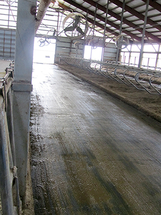 KRAIBURG KURA P walking alley flooring made of rubber in the dairy cow cubicle house, since 2002, Rickland Farms, USA