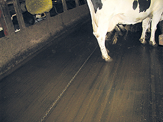 KRAIBURG KURA P walkway flooring made of rubber in the dairy cow cubicle house, since 2003, Timo Flankkila, Finnland