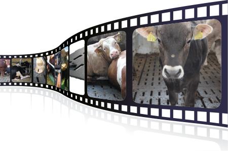 Videos über KRAIBURG Stallgummimatten für die Mastbullenhaltung in der Praxis, über Produktion und Qualität