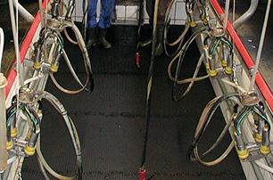 KRAIBURG ergoMILK - rubber mat for the milker in the milking pit