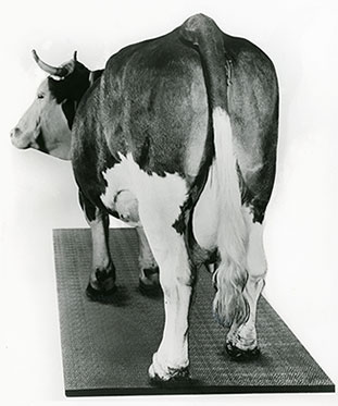 KRAIBURG cow house mat in 1976